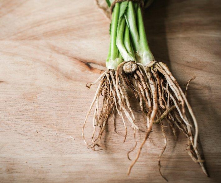 koriander, wortel, groeien, kruiden, diy, moestuin