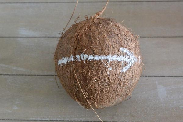 kokosnoot openmaken, evenaar