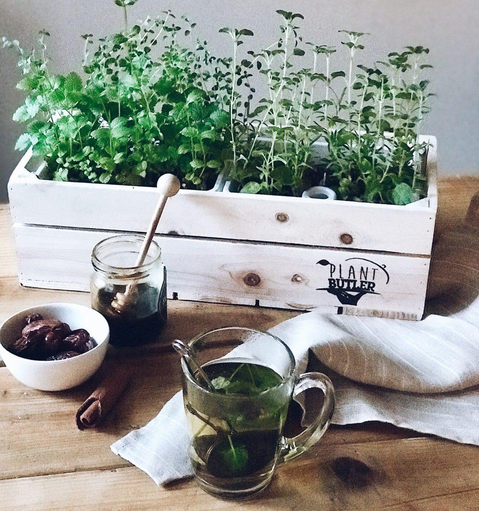 Win: Kant-en-klare kruidentuin PlantButler (+ plantjes) voor mensen zónder groene vingers!