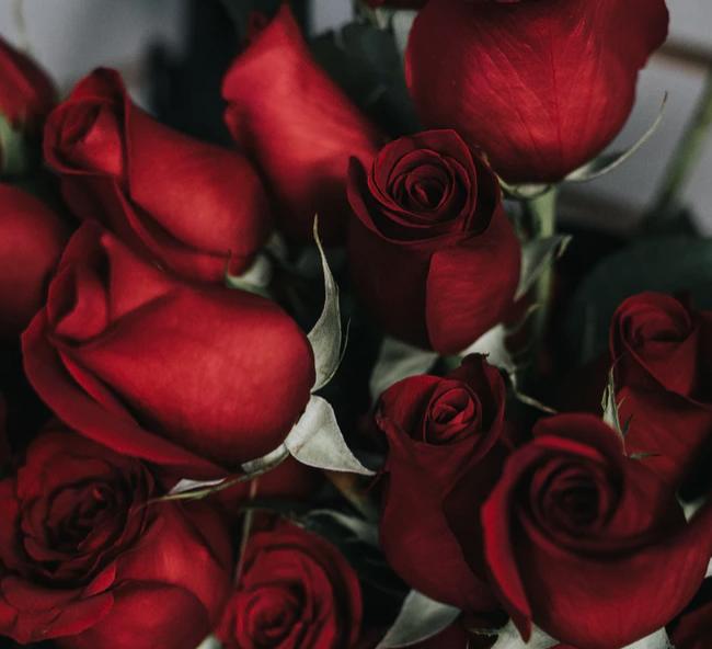 Rode rozen (eetbaar)